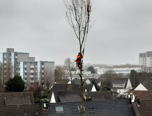 Opération de levage pour l'extraction d'un arbre