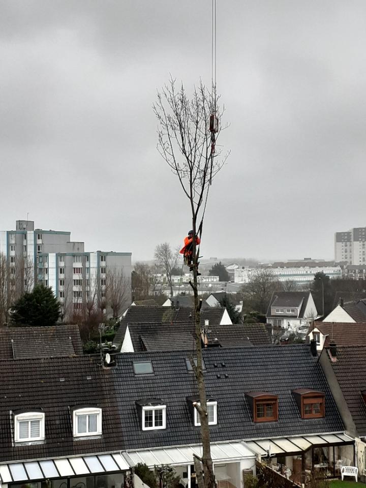 Opération de levage avec notre grue de construction MK88 après l'élagage et l'abattage d'un arbre